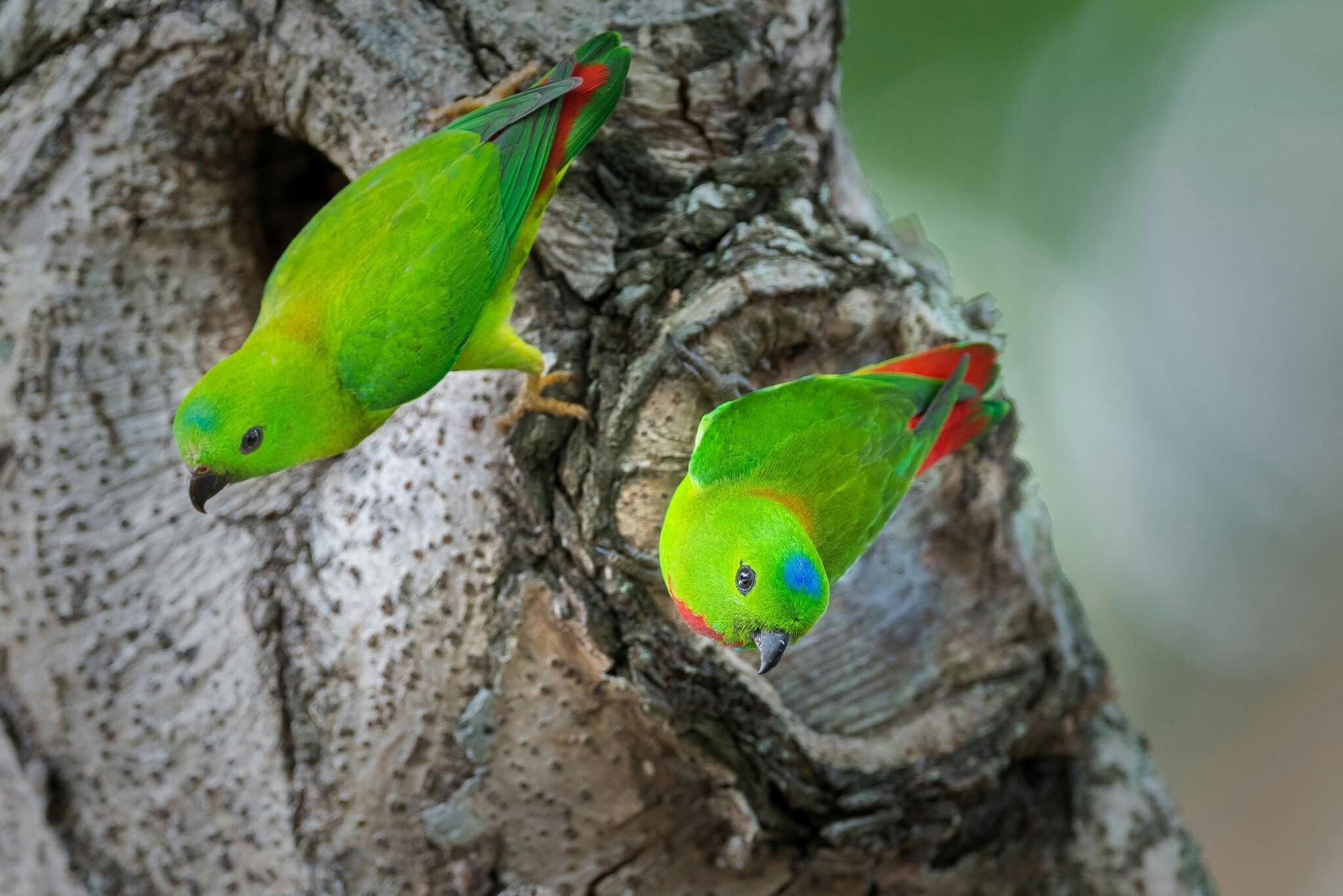 Image result for bird photography singapore