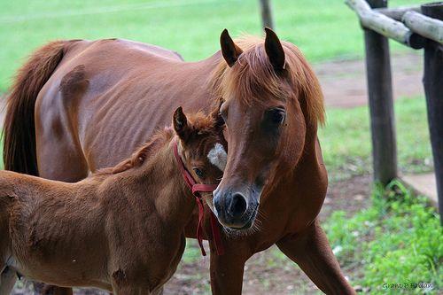HORSING AROUND (Mom and Baby) - http://www.1pic4u.com/blog/2014/09/08/horsing-around-mom-and-baby/