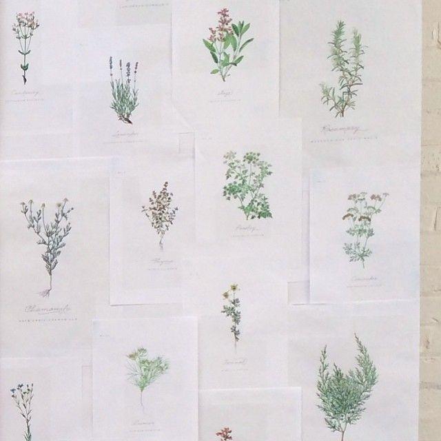 All The Frills Instagram | Botanical backdrop