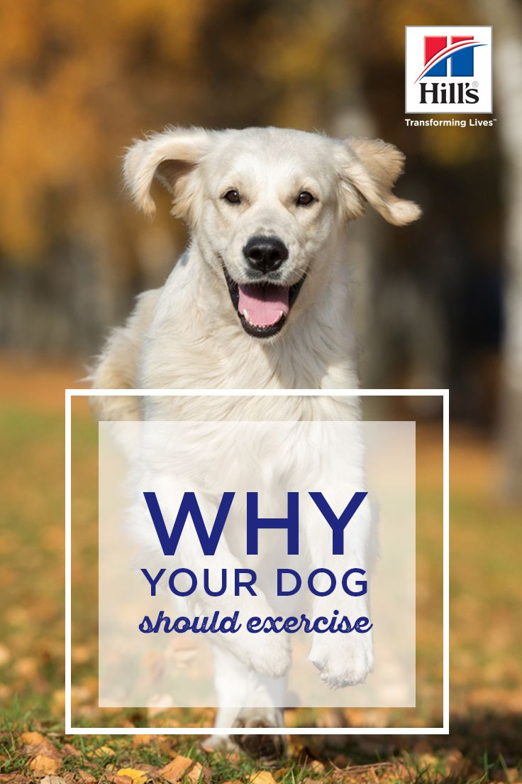 Exercise Benefits for Your Dog's Breed & Age Dogs, Dog