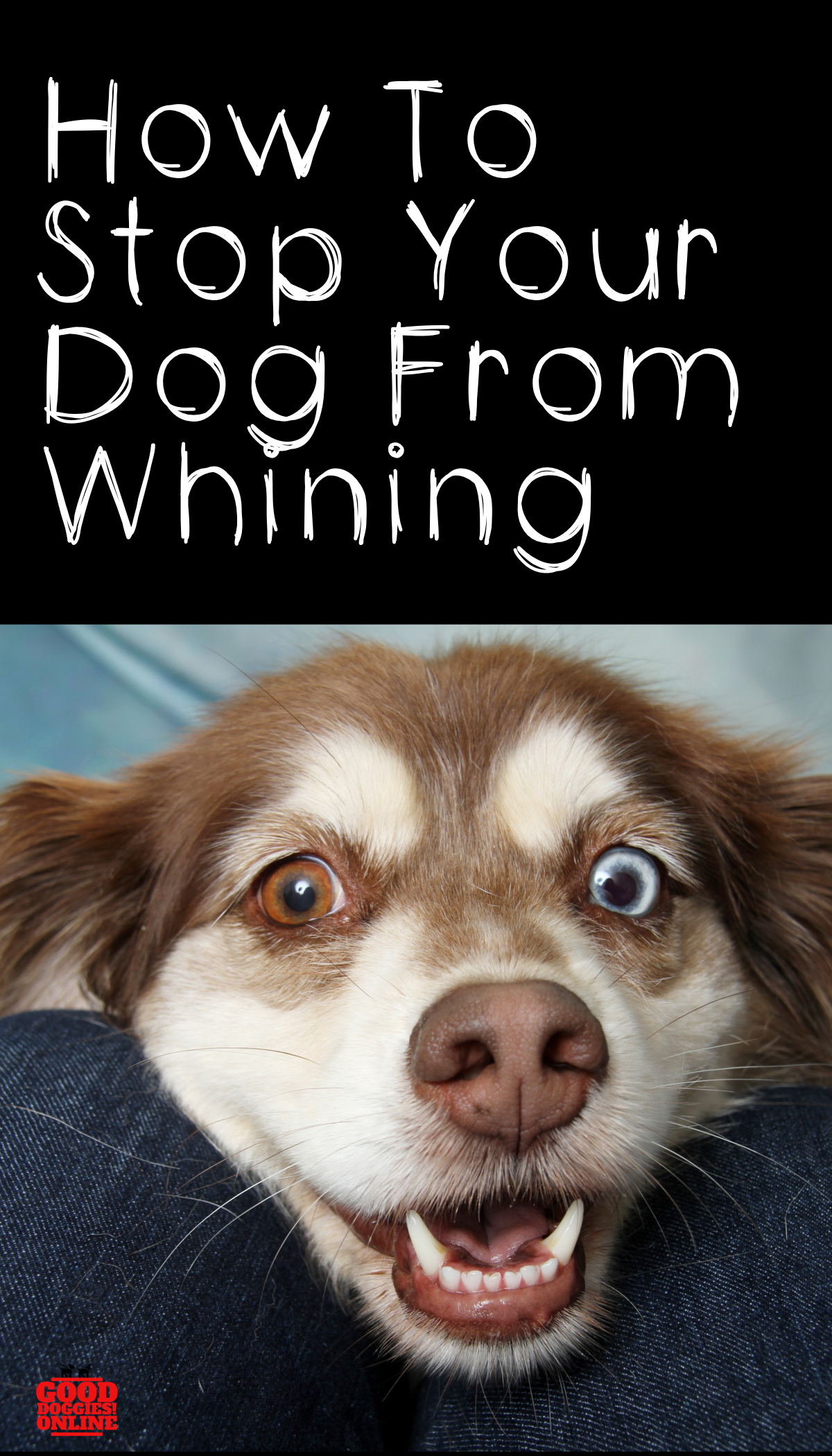 How To Stop Your Dog From Whining Good Doggies Online Your Dog Dogs Good Doggies Online