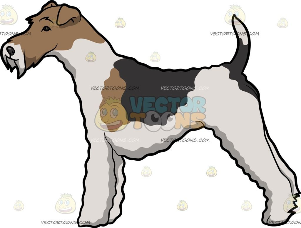 A Wire Fox Terrier Show Dog | Vector Illustrations | Pinterest ...