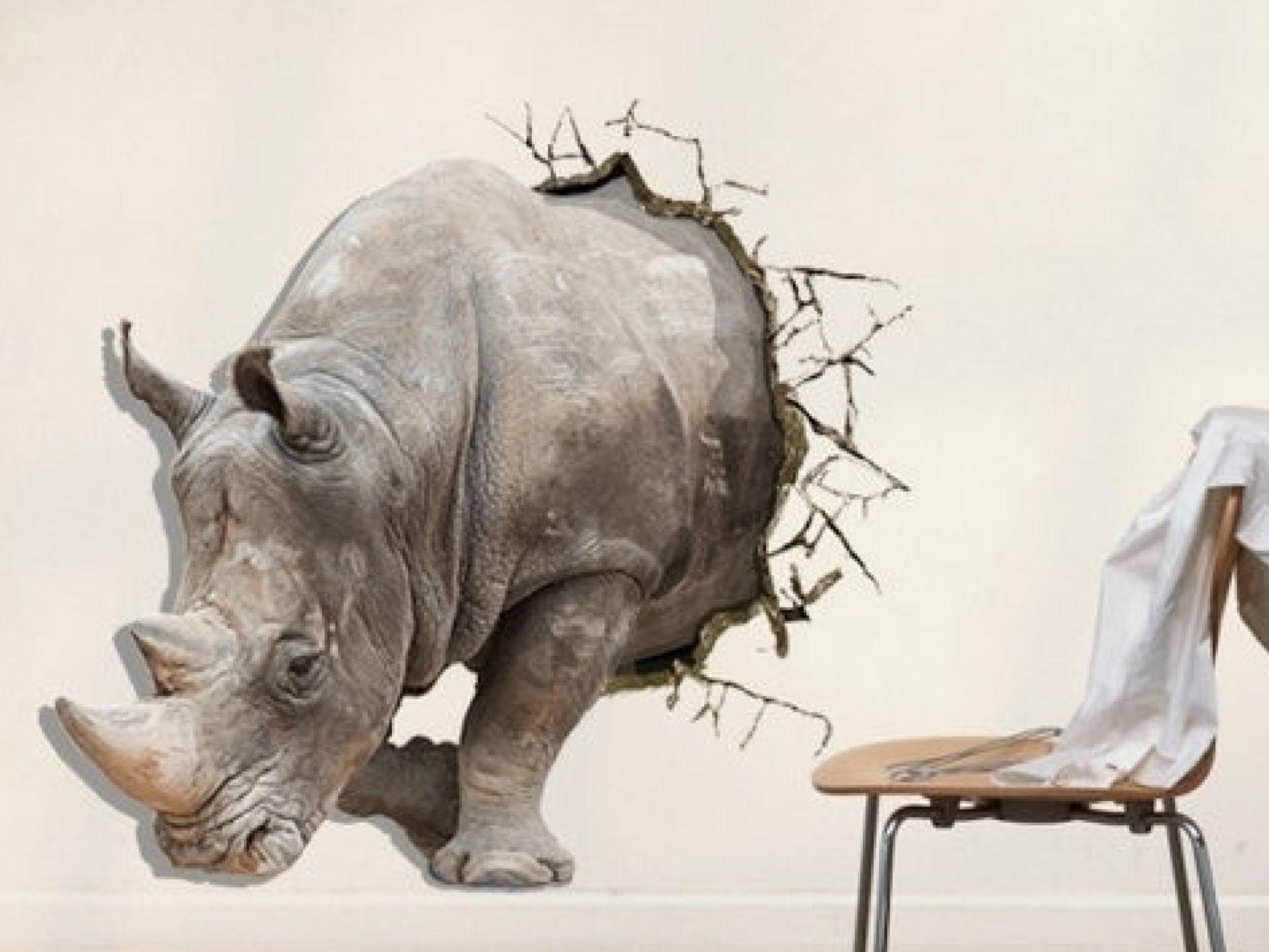 Обои носороги. Животные foto 9