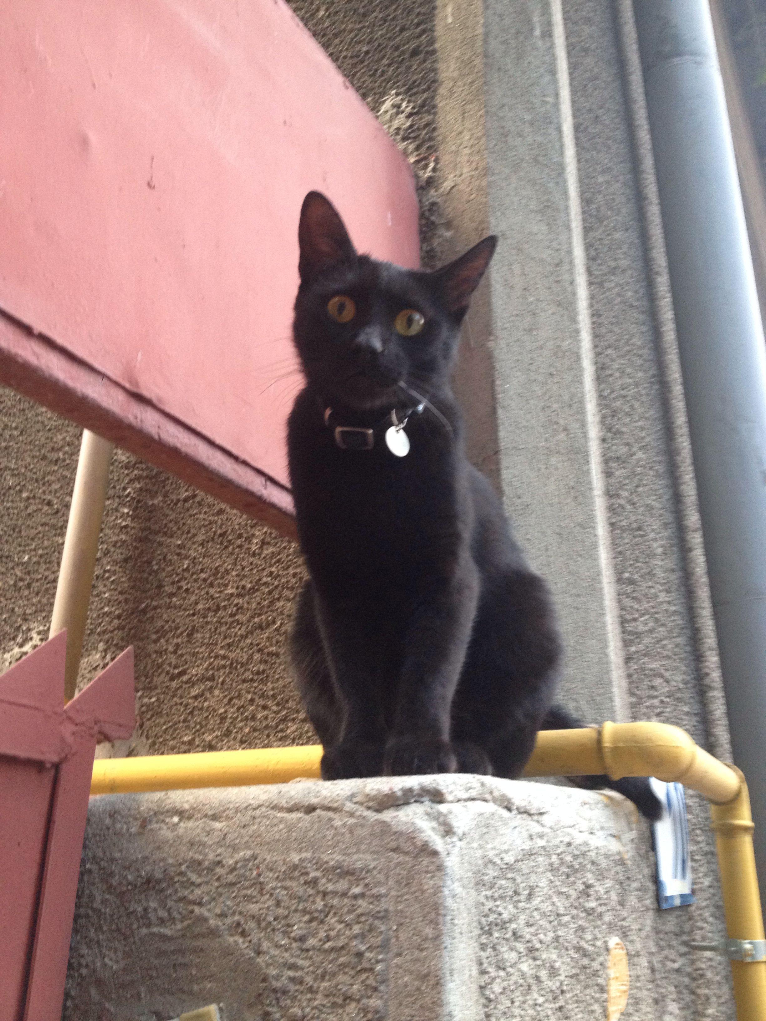 Say something?! Black cat, Cats, Cat names