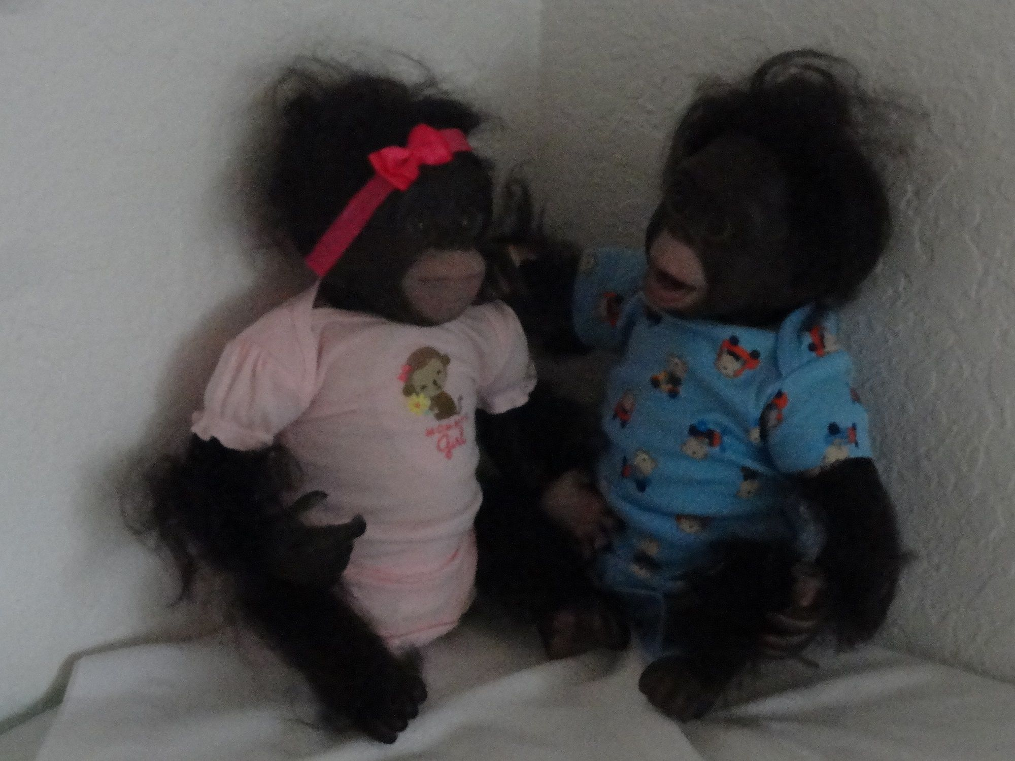 These are two reborn baby chimpanzees named Chaz and Cici Cici is