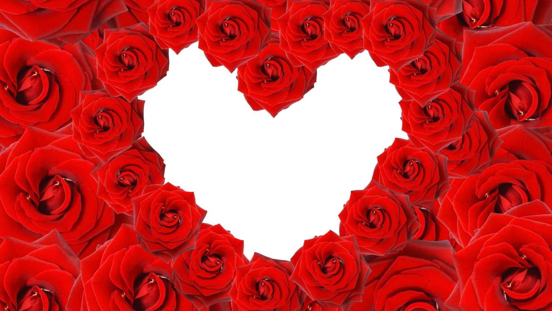 Love Red Roses In A Heart Shape On White Background Rose Wallpaper