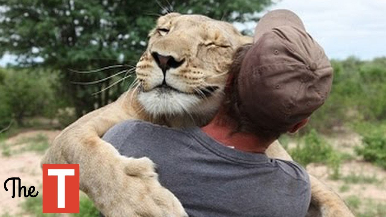 10 Unbelievable Animals That Saved People S Lives With Images