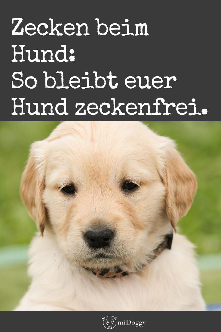 Zecken Haben Wir Nicht Mehr In 2020 Zecken Hunde Welpen Erziehung