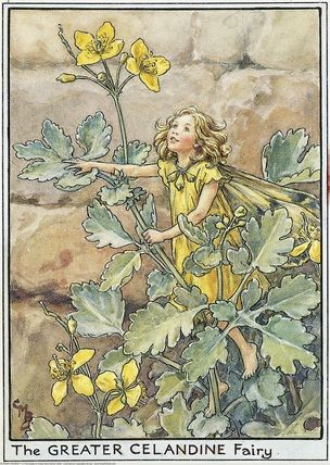Illustration for the Greater Celandine Fairy from Flower Fairies of the Wayside. A girl fairy stands amongst a greater celandine flower growing against a wall. She looks up.    Author / Illustrator  Cicely Mary Barker