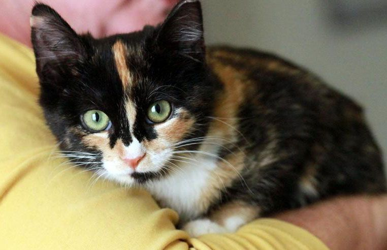 Adoptable Cat Of The Day Aspen In Maryland With Images Cat Adoption Cat Day Animal Welfare League