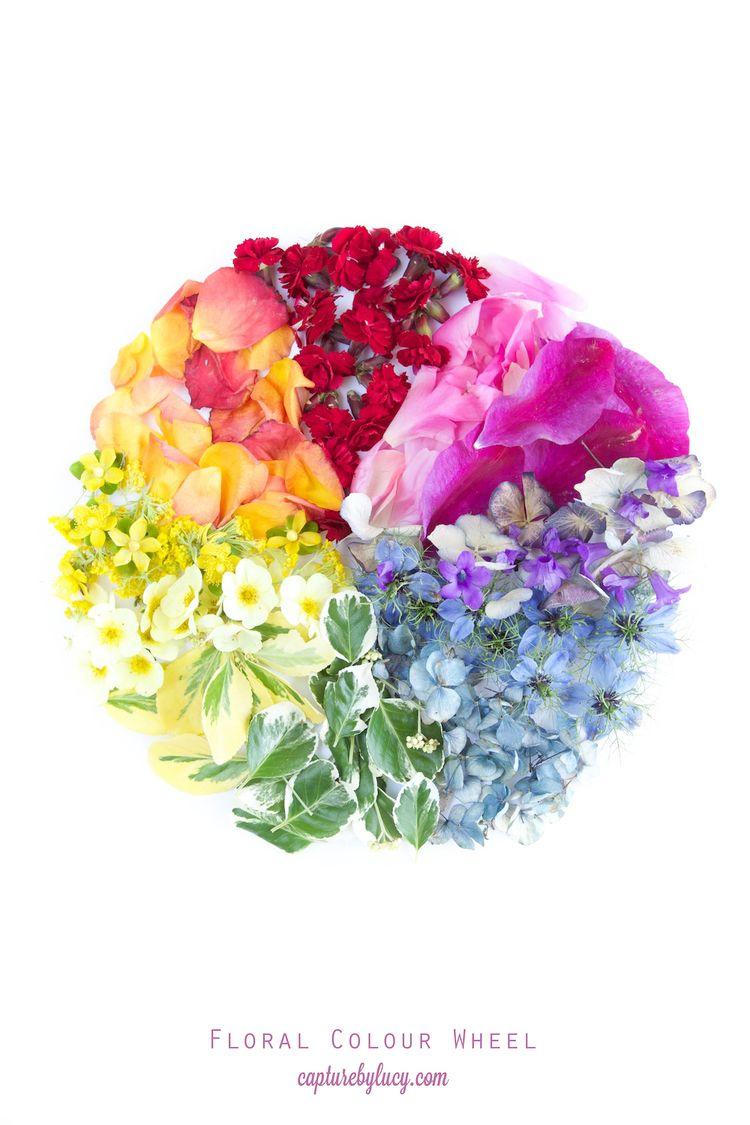 Floral Colour Wheel Capturingcolour Gardening Botany Unit Study