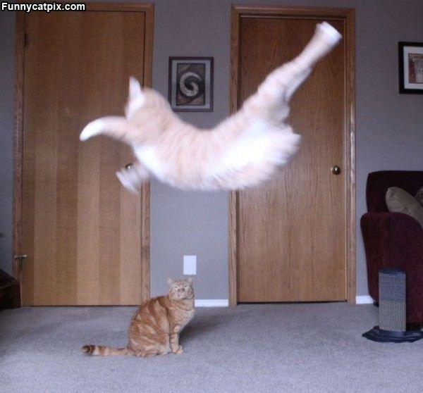 Flying Ninja Cat Ninja Cats Great Cat Cats