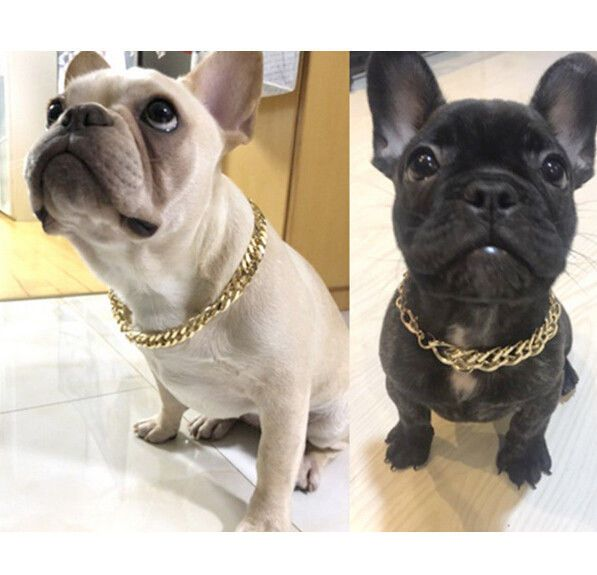 Collars Ebay Pet Supplies Dogs Dog Necklace French Dogs
