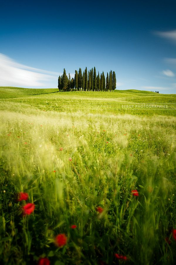 Tuscany windy green fields, Italy