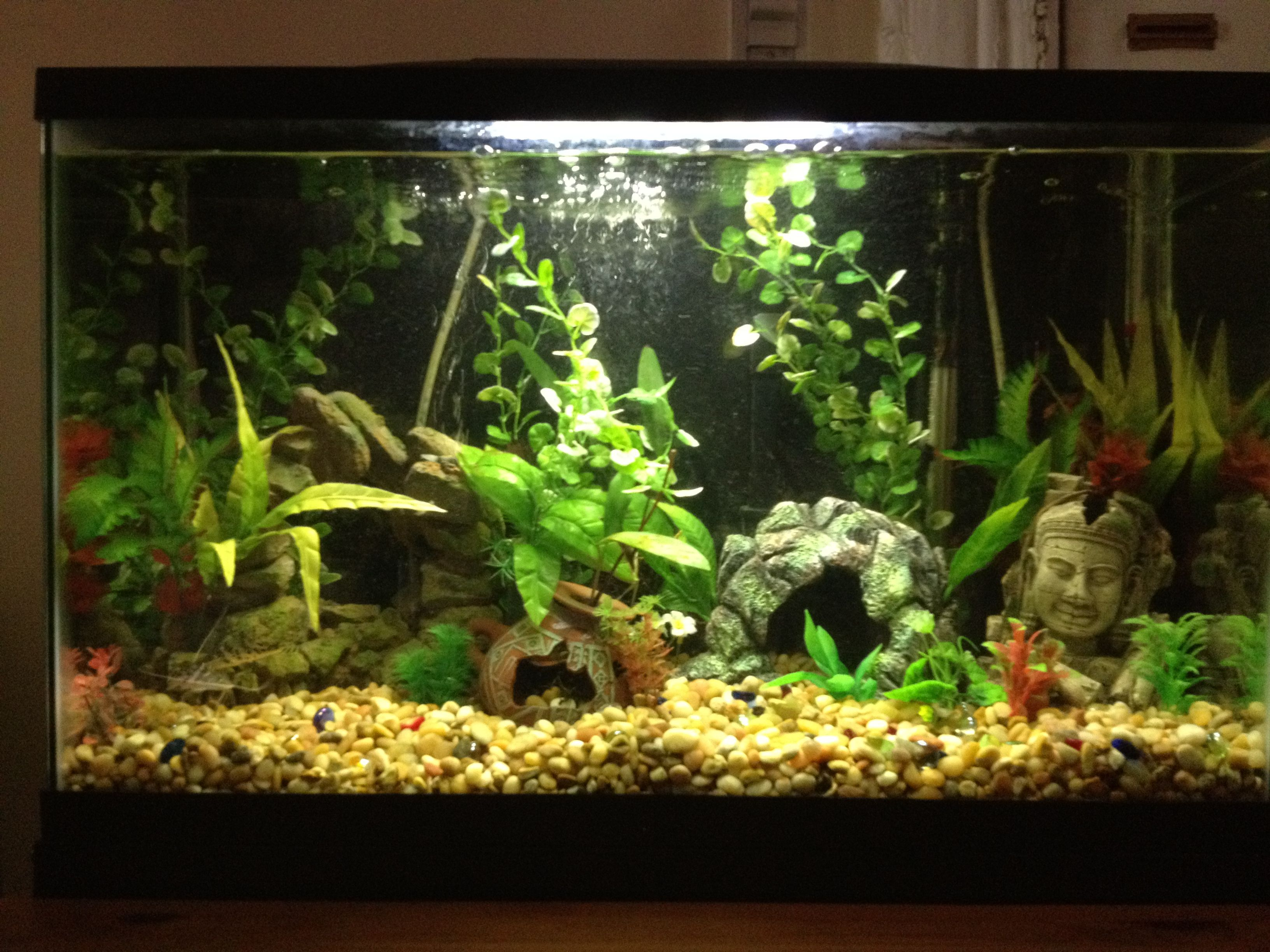 New amazon riverbed fish tank 29 gallon freshwater with 3 for Betta fish tanks amazon