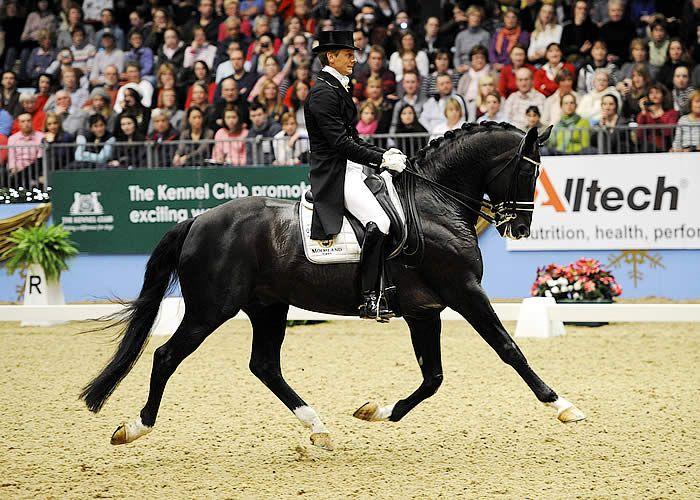 Totilas Black Horse Dressage Extended Trot Stallion ...
