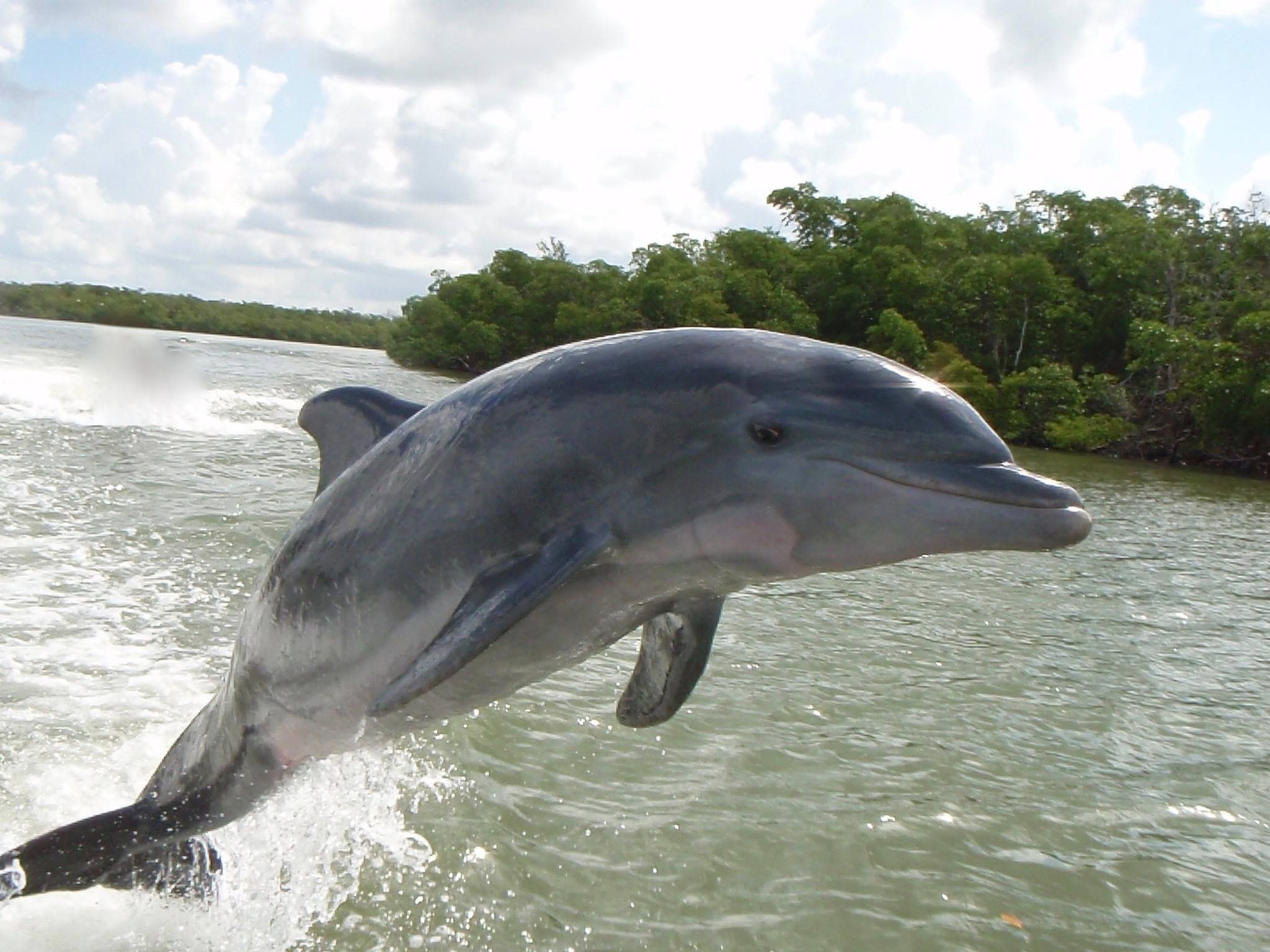Pin by bruce l on animal world dolphin encounters