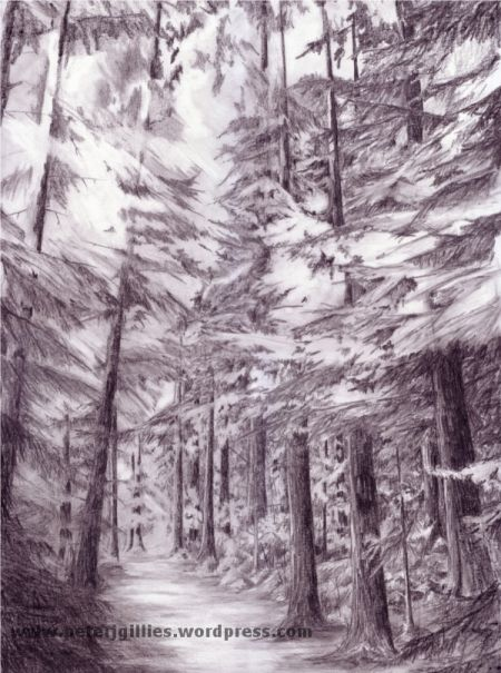 Pencil drawing of the inverfarigaig forest scotland http for Forest scene drawing