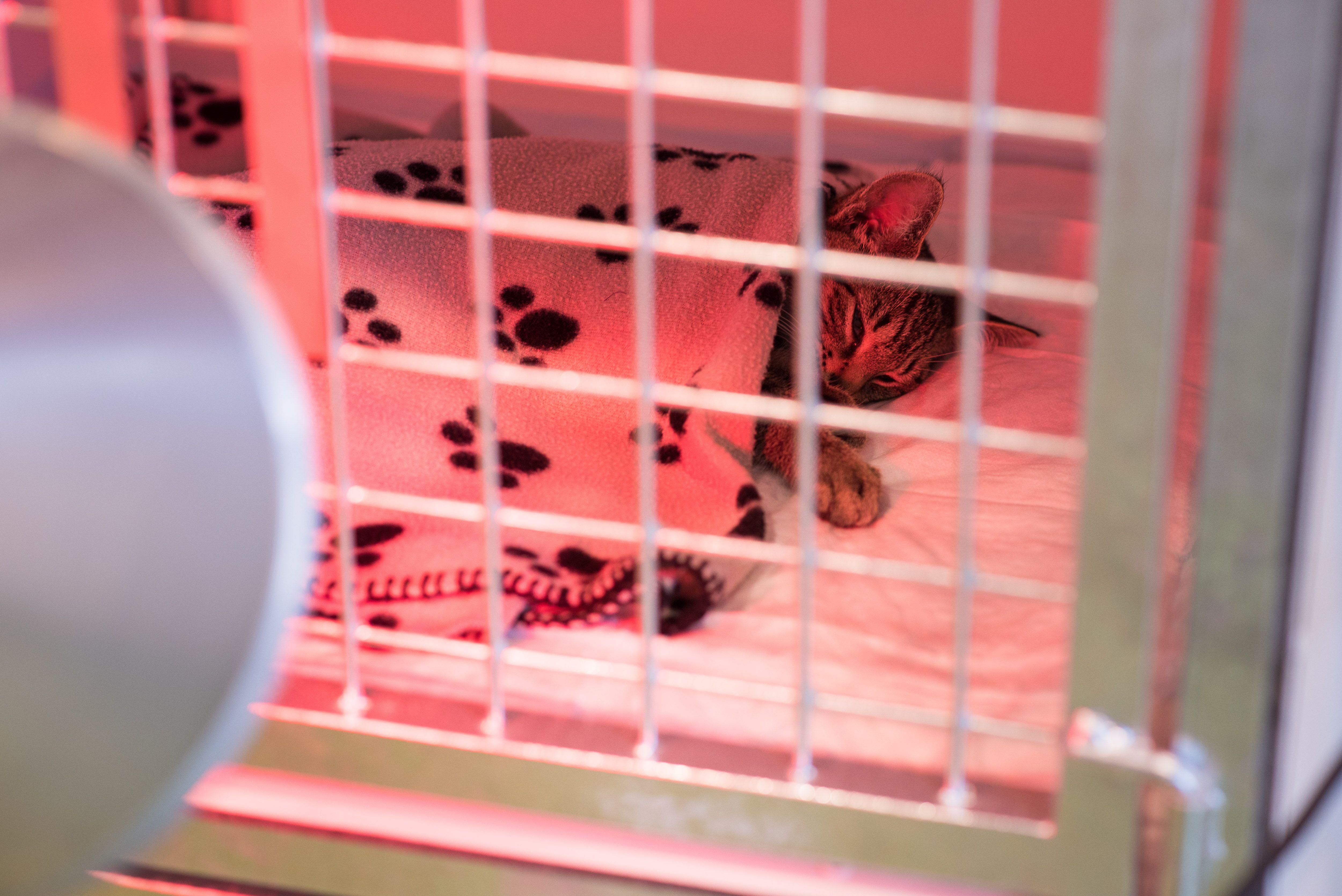 Hospitalisatie bij dierenarts Caroline Polaster uit Mol Ginderbuiten