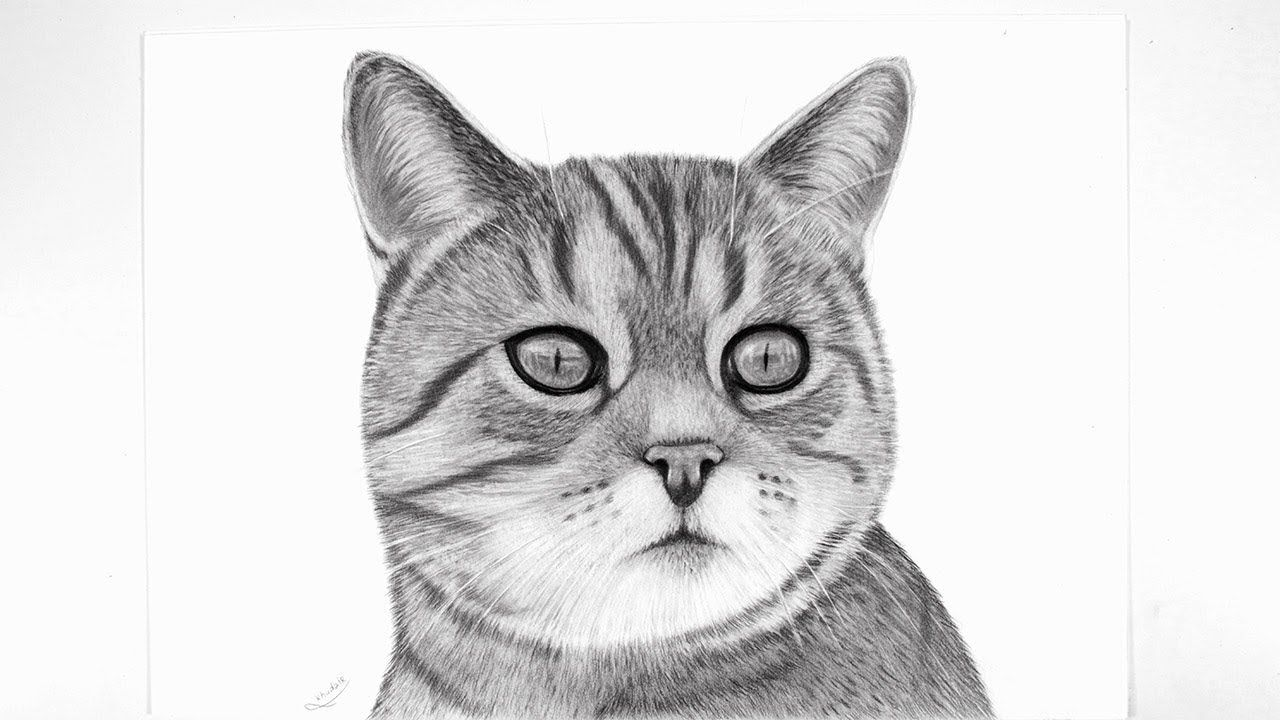 Pencil Sketch How To Draw A Realistic Cat Cats Animal Drawings Cat Drawing