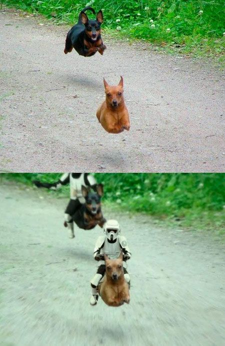 Just Two Dogs Running Funny Pictures Funny Animals Star Wars Memes