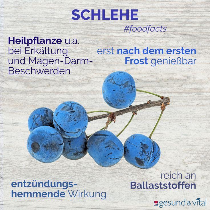 1d266014fa4610ed9f0e70b92ceb102e - Schlehen Rezepte