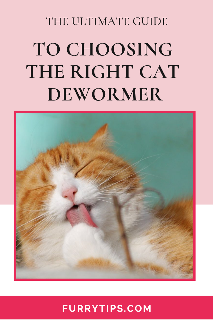 In This Guide You Will Be Able To Quickly Figure Out What Cat