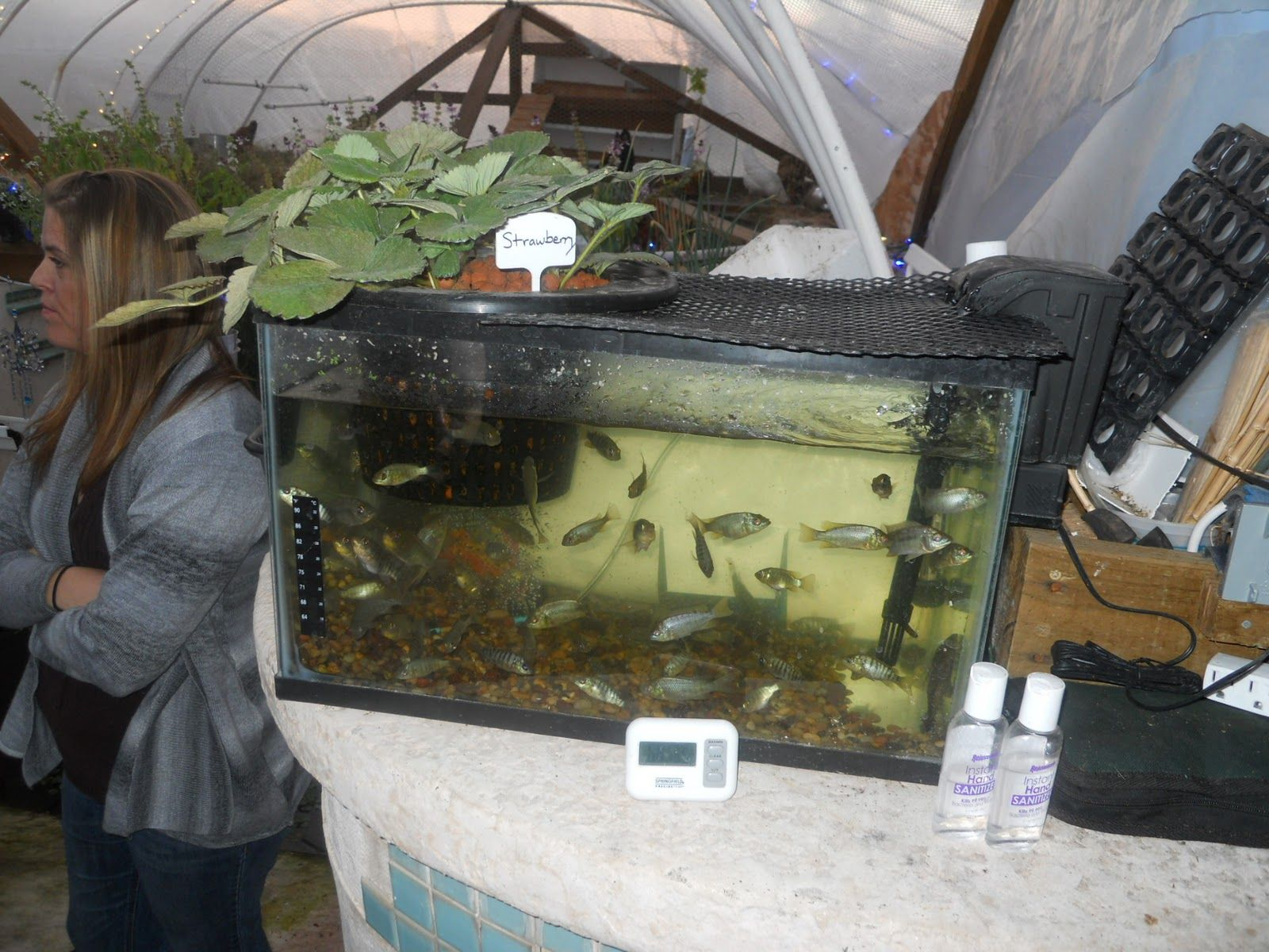 17 Best images about Gardening Aquaponics on Pinterest Fish