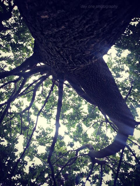 Day One Photography: Shelter Under A Tree. Photo by #FredaMans