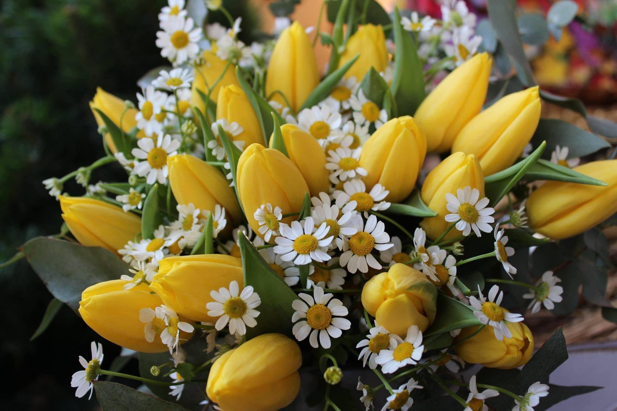 Kytica z tulipánov a kamiliek 28 € http://www.kvetysilvia.sk/donaskova-sluzba/