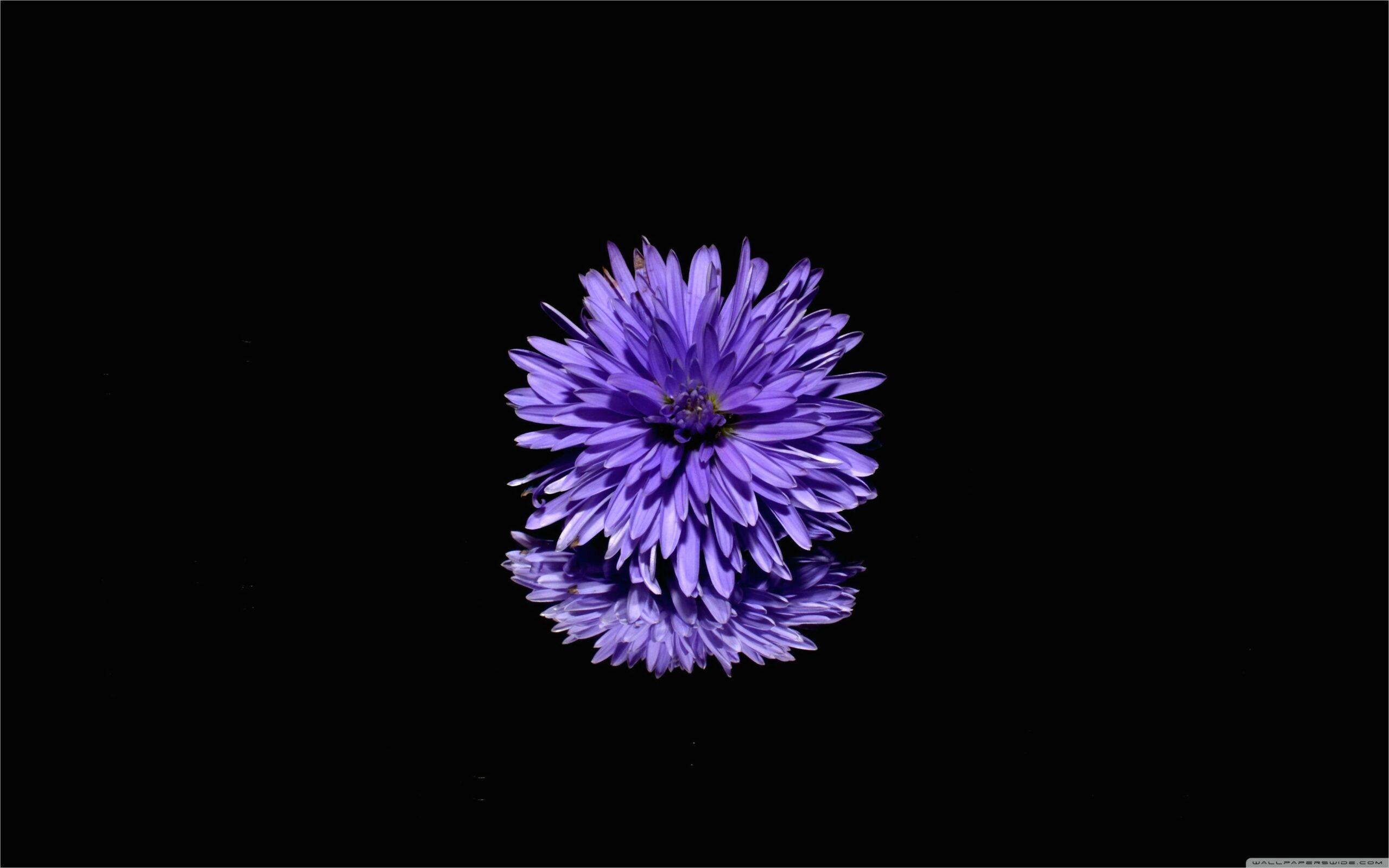 4k Black Background Wallpaper In 2020 Purple Flowers Flowers Purple