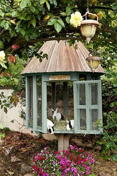 Garden Beauty On A Budget Rabbit Hutches Backyard Chickens Backyard