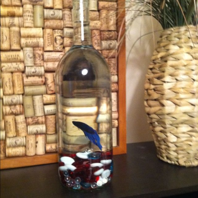 Omg wine bottle beta fish tank unusual fish for Fish wine bottle