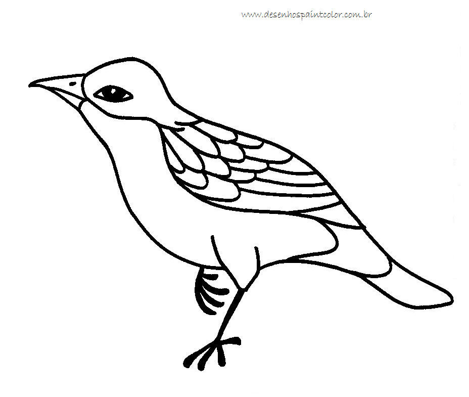 Desenho De Passaro Para Imprimir E Colorir Desenhos Paint Color
