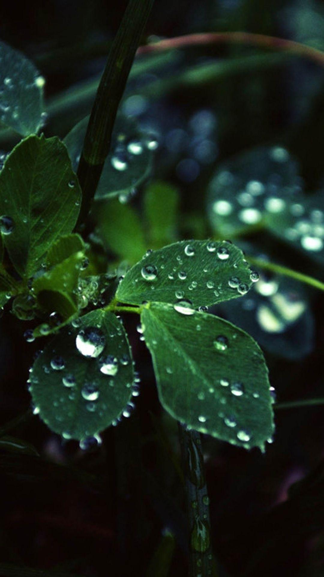 Dark Leaf Dew Macro Iphone 6 Plus Wallpaper Nature Iphone Wallpaper Iphone 6 Wallpaper Rainy Wallpaper