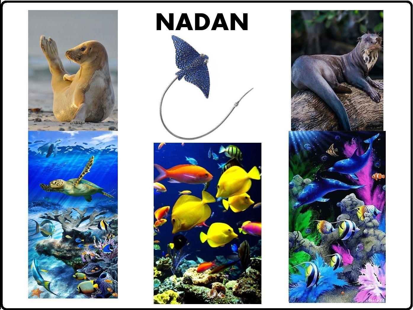 Animales Segun Su Desplazamiento Nadan Actividades De Letras Animales Que Vuelan Animales