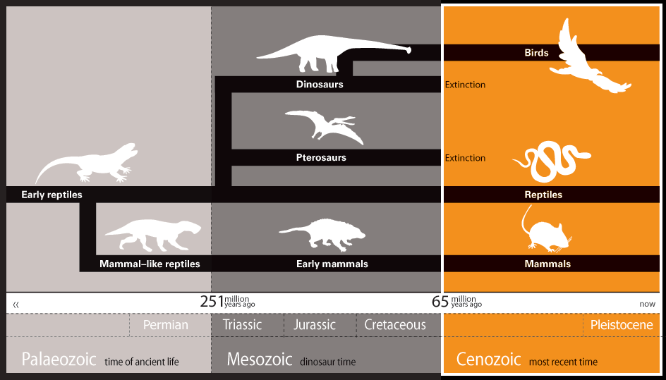 Dinosaurs Earth Timeline