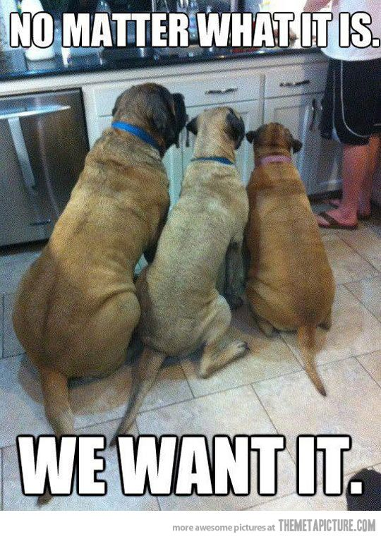 It Doesn T Matter What It Is Funny Animal Memes Animal Captions Funny Dogs