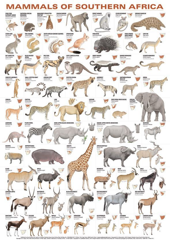 Mammals of Southern Africa Poster Säugetiere, Tierbilder