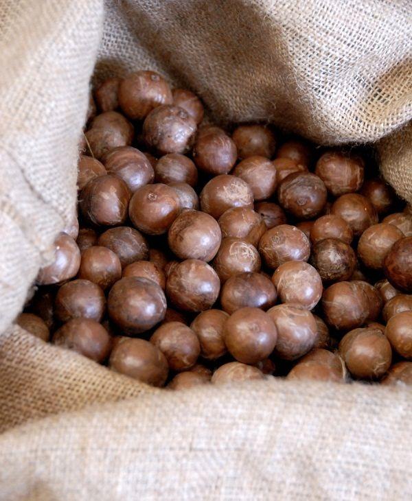10 Amazing Benefits And Uses Of Macadamia Nuts Macadamia Macadamia Nuts Organic Nuts