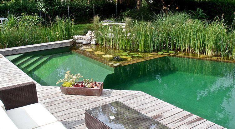 Pin Von Dana Altamirano Auf Piscinas Organicas Schwimmteich Naturschwimmteich Naturschwimmbecken
