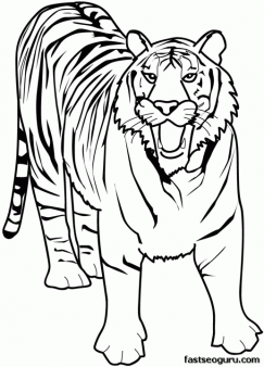 Printable Animal tiger of africa coloring pages - Printable Coloring ...