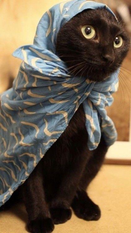 International Joke Day: 10 Of Our Favorite Corny Cat Jokes To Celebrate