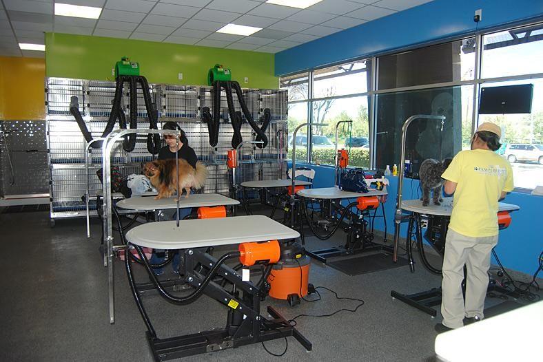 repinned-dog grooming salon design ideas - Google Search ...