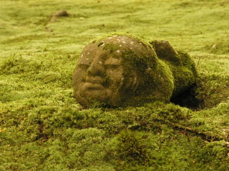 Buddha head on the Mossy Ground. Kyoto, Japan. photo by  thetzgetz