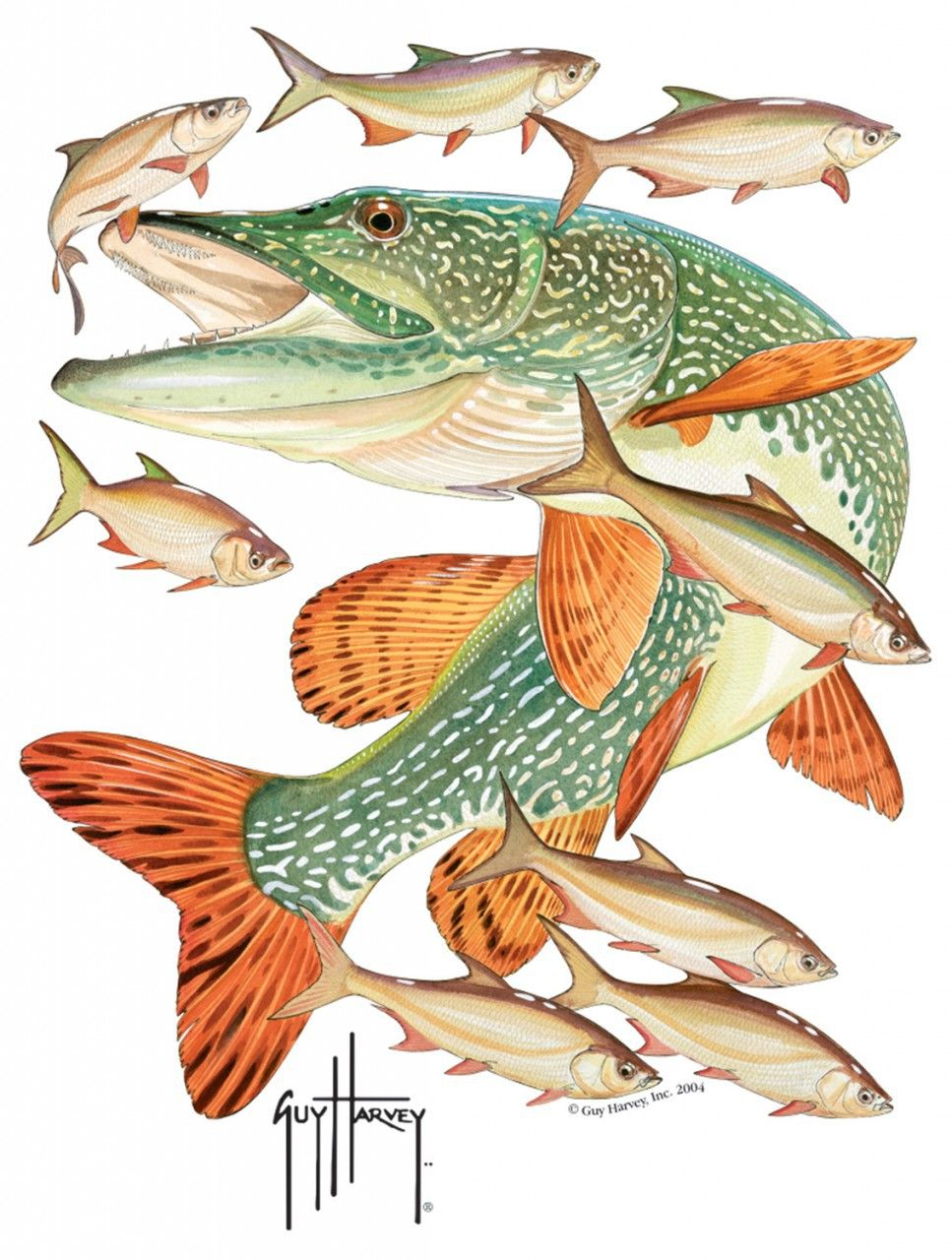 northern pike drawing - Google Search | Customer Sign Previews ...