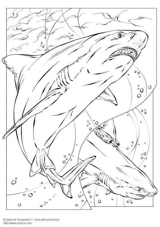 Coloring Page Bull Shark Img 5735 Shark Coloring Pages Animal Coloring Pages Coloring Pages