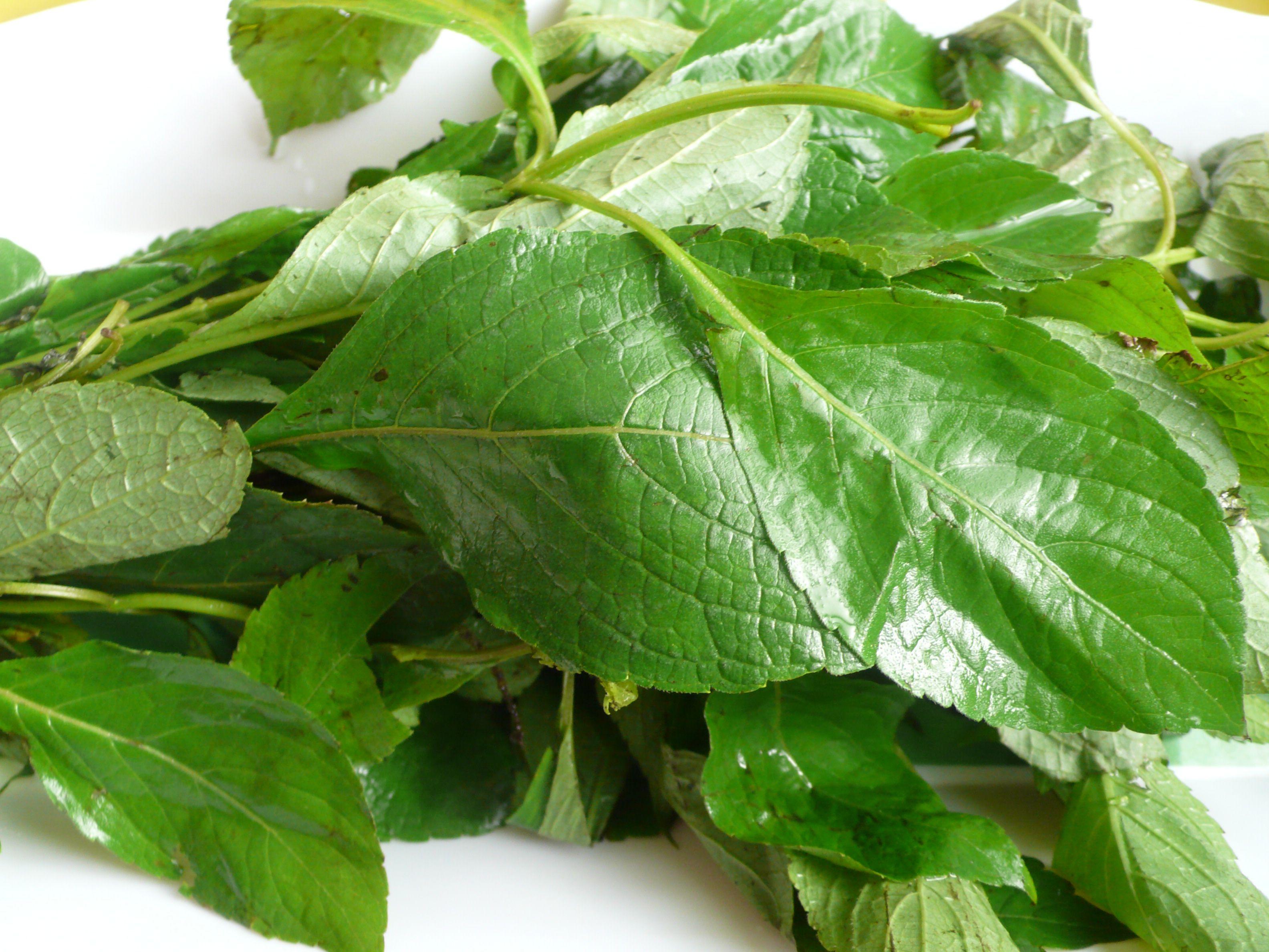 What Is Laurel Leaf In Yoruba | Jidileaf co