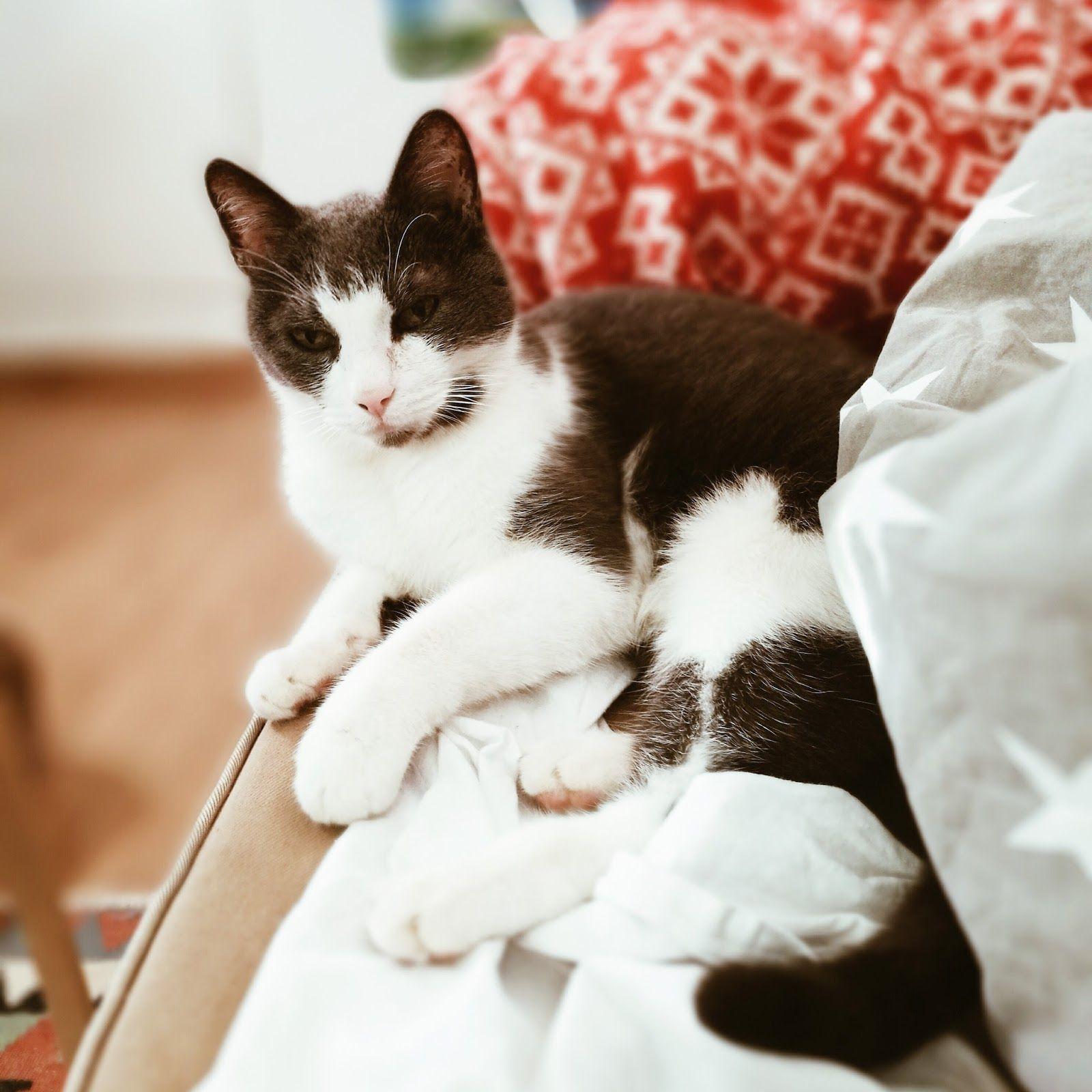 Minäkö keski-ikäinen?: Miten Osku kissa pärjää Onnin poismenon jälkeen?