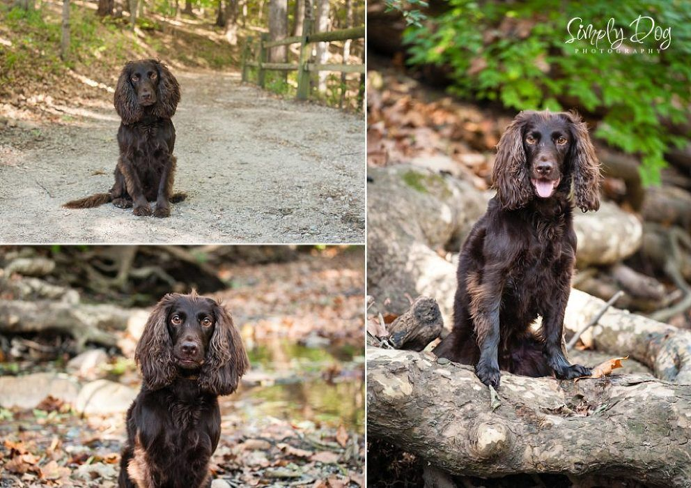Fall Outdoor Dog Session Dog Photograph Outdoor Dog Dogs